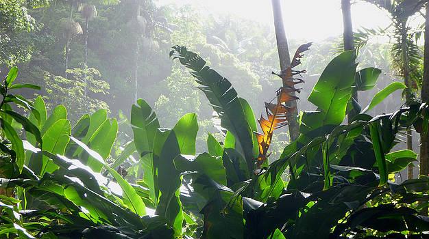 Botanical II by Mark L Watson