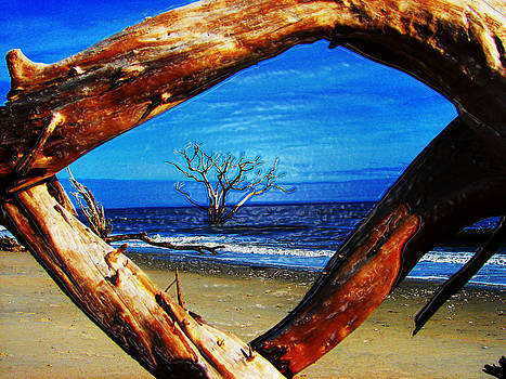 Charleston Sc Botany Bay by Ella Char