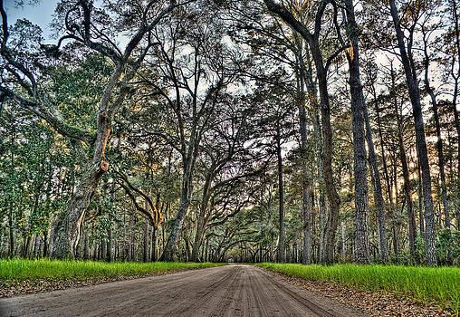 Botany Bay Road by Andrew Crispi