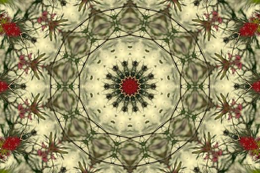 Angela Stanton - Bottle Brush Kaleidoscope
