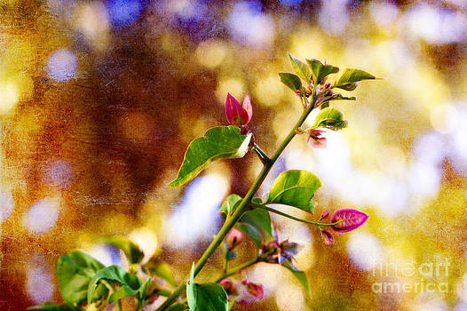 Bougainvillea Sprig by Jeanette Brown