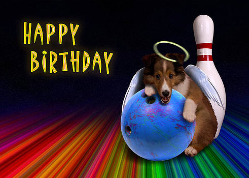 Jeanette K - Bowling Birthday Sheltie Puppy
