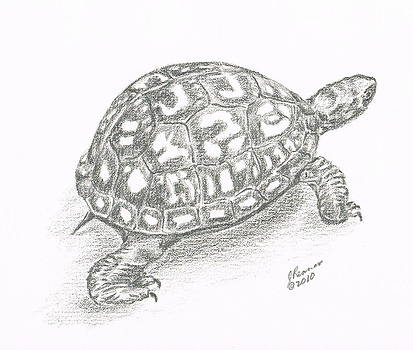 Box Turtle by Joann Renner