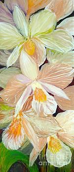 Boxed Orchids detail by Anna Skaradzinska