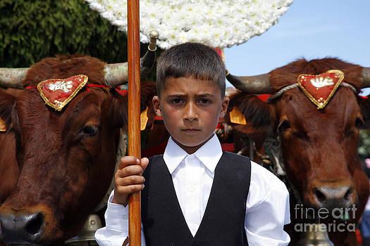 Gaspar Avila - Boy and oxen