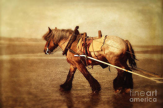 HJBH Photography - Brabant Horse on beach