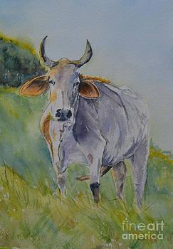 Brahma ... by Betty Mulligan