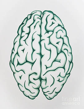 Brain by Aisha Klippenstein