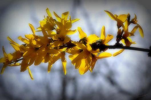Branch of Flowers by Karen Kersey