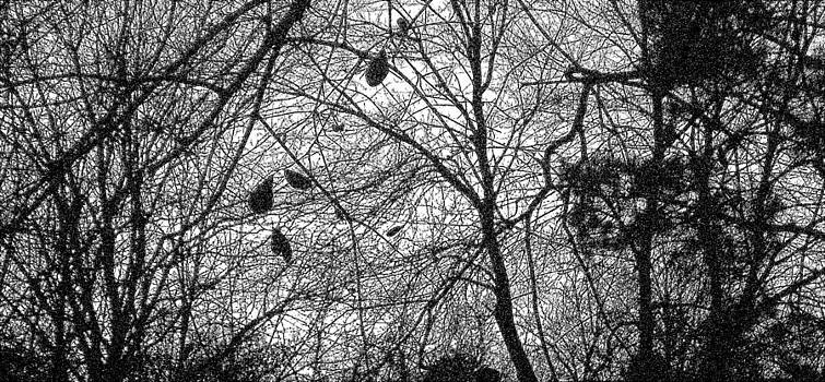 Branches by David Campbell