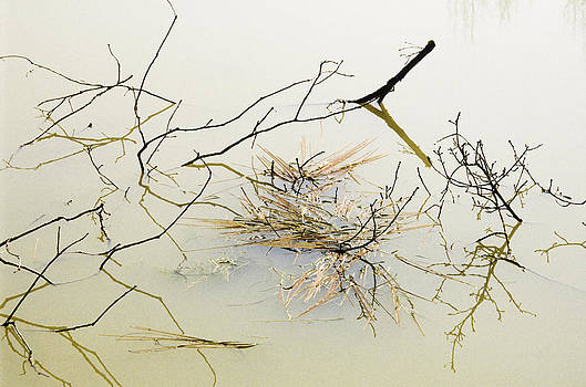 Branches in water by Patrick Kessler