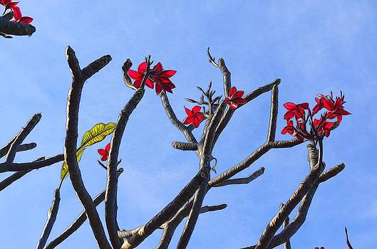 Branches of Beauty by Denise Darby