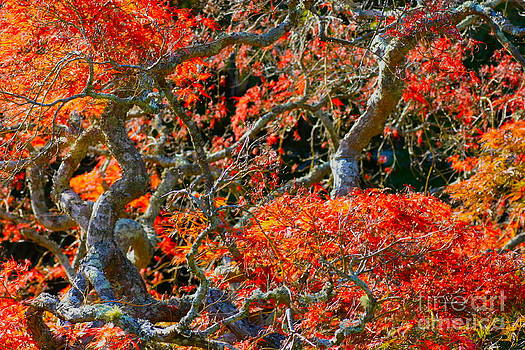 Branches of Color by Cathy Dee Janes