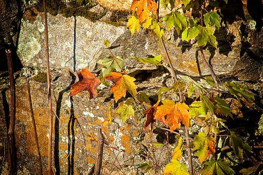Karol Livote - Branches Of Color