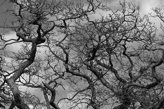 Branches of Tranquility by Nicholas Kjellner