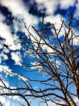 Branching light  by Natalya Karavay