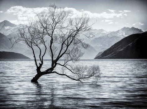 Branching Out by Kim Andelkovic