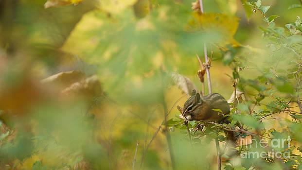 Birches Photography - Breakfast