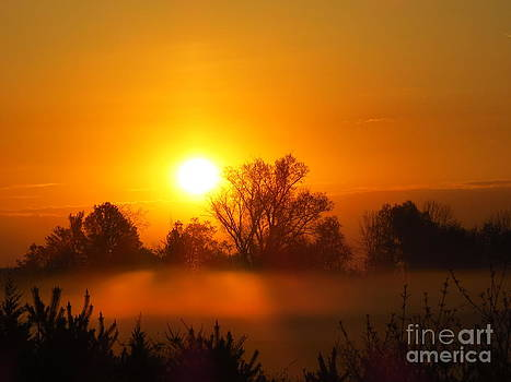Breaking Dawn by David Lankton