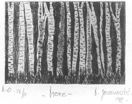 Breze -Silver birch by Branko Jovanovic