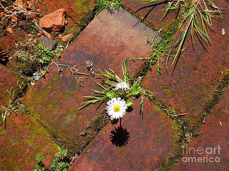 Brick Daisy by Dawn Kori Snyder