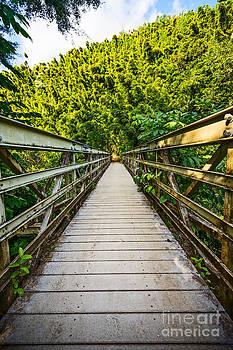 Jamie Pham - Bridge to the Forest - Pipiwai Trail in Maui.