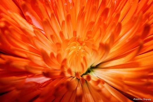 Bright As the Sun by Michelle Nixon