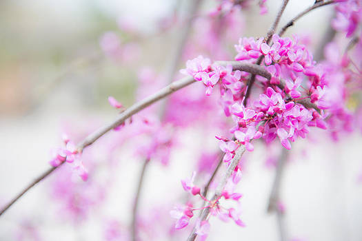 Bright Red Bud by Courtney DeGregorio