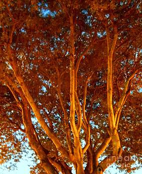 Bright Rust Colored Tree by Debb Starr