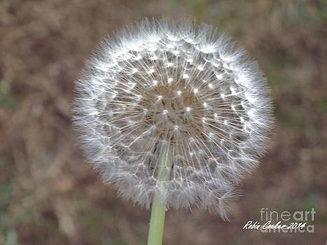 Bright Wishes by Robin Coaker