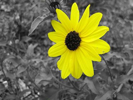 Bright Yellow Flower by Barry Miller