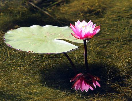 Brilliance In Bloom by David  Jones
