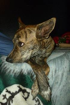 Brindle on the Bed by Montana Wilson