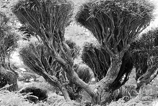 Bristles by George Mount