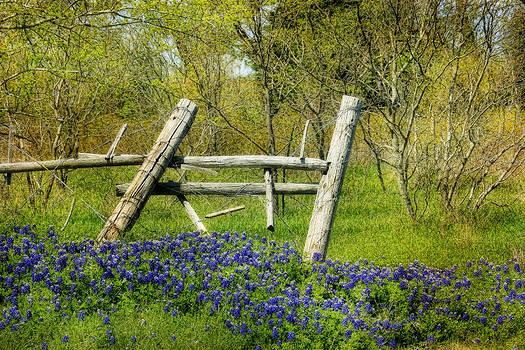Broken Fence by Joan Bertucci