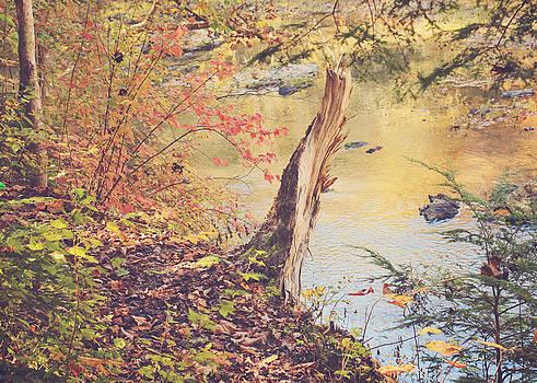 Broken Tree in Autumn by Jessie Gould