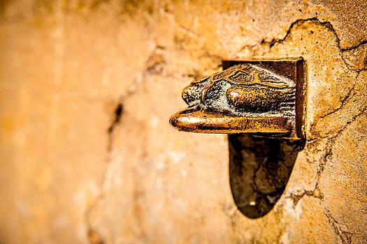 onyonet  photo studios - Bronze Desert Tortoise