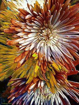 Bronze Fuji Spider Mum by Michelle Frizzell-Thompson