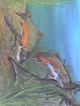 Brook Trout by Stephen Thomson