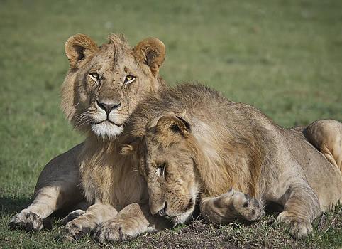 Brotherly Love by Sandy Schepis