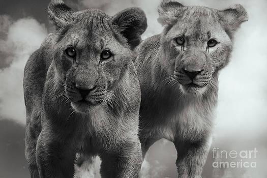 Brothers by Christine Sponchia
