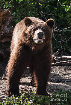 Joann Copeland-Paul - Brown Bear