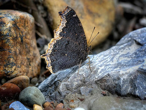 Brown Butterfly Cuyahoga Valley by Jenny Ellen Photography