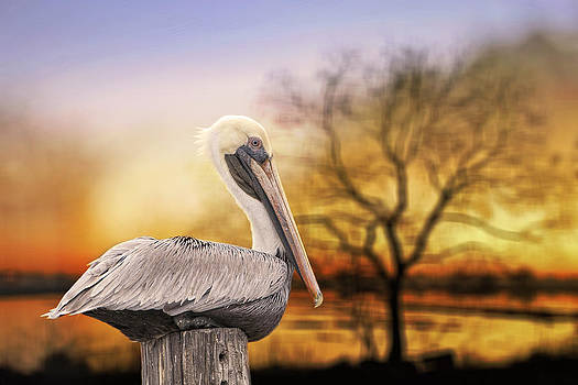Brown Pelican at Rest by Bonnie Barry