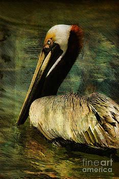 Deborah Benoit - Brown Pelican Beauty