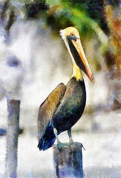 Brown Pelican by Lester Phipps