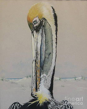 Brown Pelican  by Nancy  Parsons
