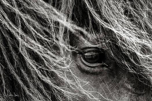 Brunn Stjarna by Joan Davis
