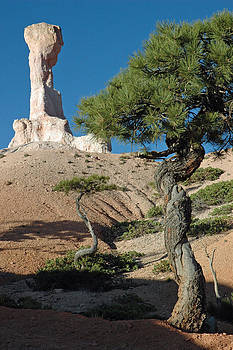 Bryce Canyon Rock Formation and Twisted Trees by Bruce Gourley