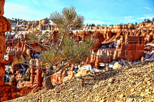 Bryce Canyon Tree up Close by Marti Green